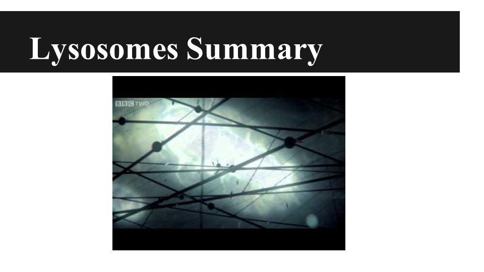 Lysosomes Summary