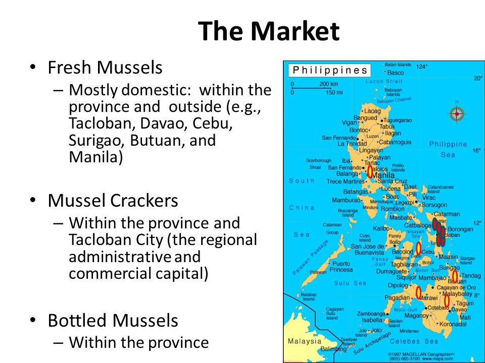 The Market Fresh Mussels – Mostly domestic: within the province and outside (e.g., Tacloban, Davao, Cebu, Surigao, Butuan, and Manila) Mussel Crackers – Within the province and Tacloban City (the regional administrative and commercial capital) Bottled Mussels – Within the province