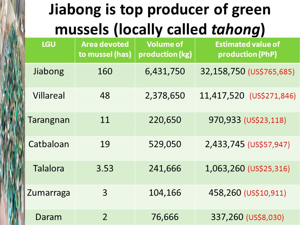 Jiabong is top producer of green mussels (locally called tahong) LGUArea devoted to mussel (has) Volume of production (kg) Estimated value of production (PhP) Jiabong1606,431,75032,158,750 (US$765,685) Villareal482,378,65011,417,520 (US$271,846) Tarangnan11220,650970,933 (US$23,118) Catbaloan19529,0502,433,745 (US$57,947) Talalora3.53241,6661,063,260 (US$25,316) Zumarraga3104,166458,260 (US$10,911) Daram276,666337,260 (US$8,030)