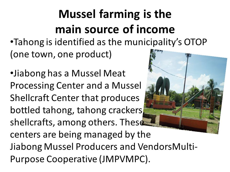 The Mussel Farmers in Jiabong BarangayNumber of Mussel Farmers Method Used Number of Poles MaleFemale Total Jia-an20- Staking 1 with 1000 poles 19 with 200 poles each Alejandrea33235 3 with 1000 poles; with 500 poles; 31 with 200 poles each Malobago19120 All 20 have 200 poles each Macabetas22- All 22 have 200 poles each Total94397