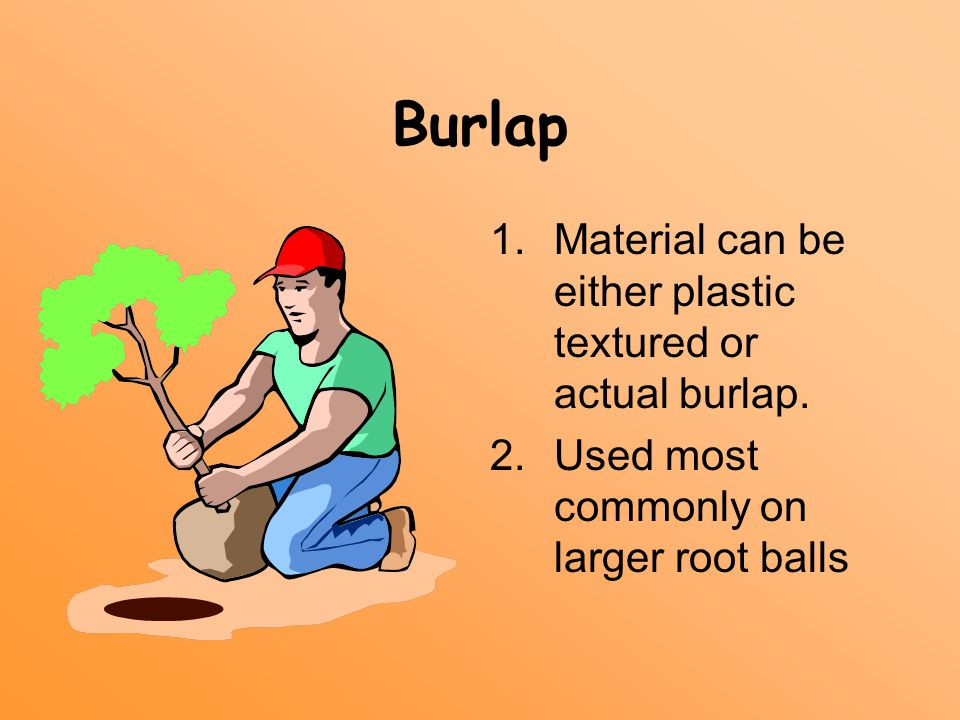 Burlap 1.Material can be either plastic textured or actual burlap. 2.Used most commonly on larger root balls