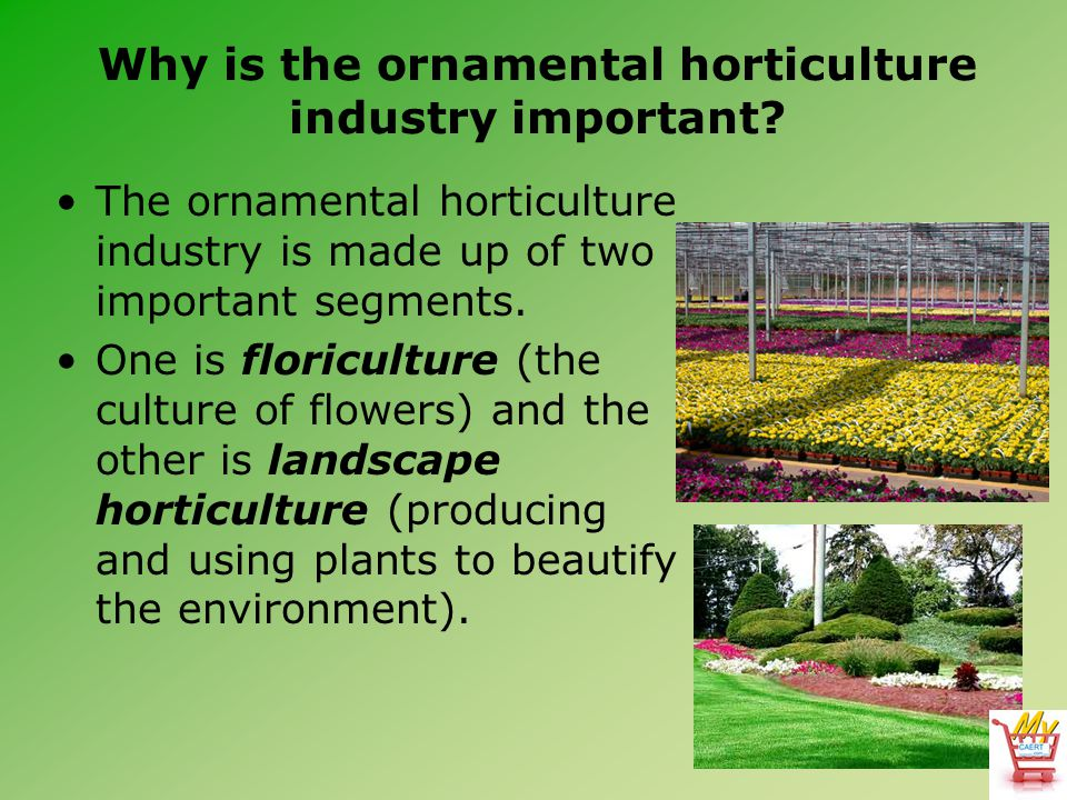 Why is the ornamental horticulture industry important.