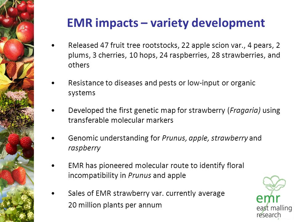 EMR impacts – variety development Released 47 fruit tree rootstocks, 22 apple scion var., 4 pears, 2 plums, 3 cherries, 10 hops, 24 raspberries, 28 strawberries, and others Resistance to diseases and pests or low ‑ input or organic systems Developed the first genetic map for strawberry (Fragaria) using transferable molecular markers Genomic understanding for Prunus, apple, strawberry and raspberry EMR has pioneered molecular route to identify floral incompatibility in Prunus and apple Sales of EMR strawberry var.