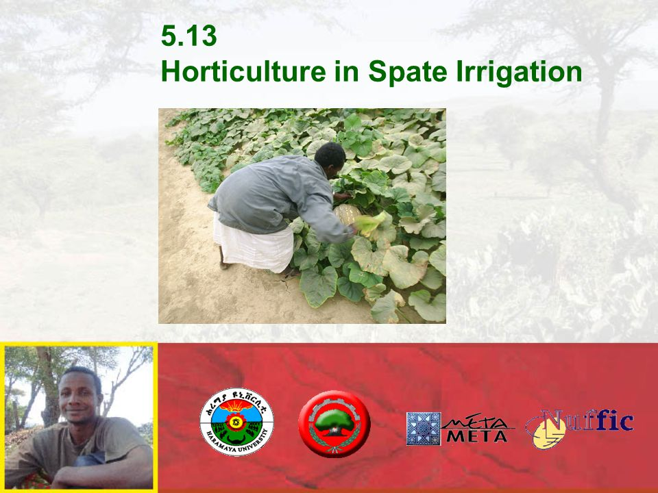 Horticulture in Spate Irrigation  Horticultural production is possible in spate irrigation, provided:  Use the cool season  Soils are sandy-loamy preferable with good organic content  Care is taken in conserving soil moisture  Care is taken to prevent damage from tresspassing livestock, birds and pests  Care is taken to avoid damage from late floods  Note:  Additional use of groundwater makes it easy
