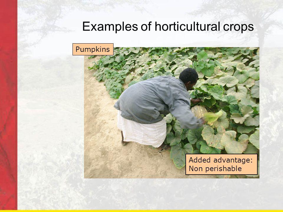 Examples of horticultural crops Pumpkins Added advantage: Non perishable