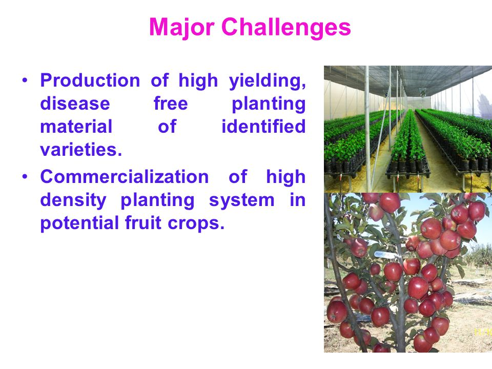 Major Challenges Production of high yielding, disease free planting material of identified varieties. Commercialization of high density planting syste