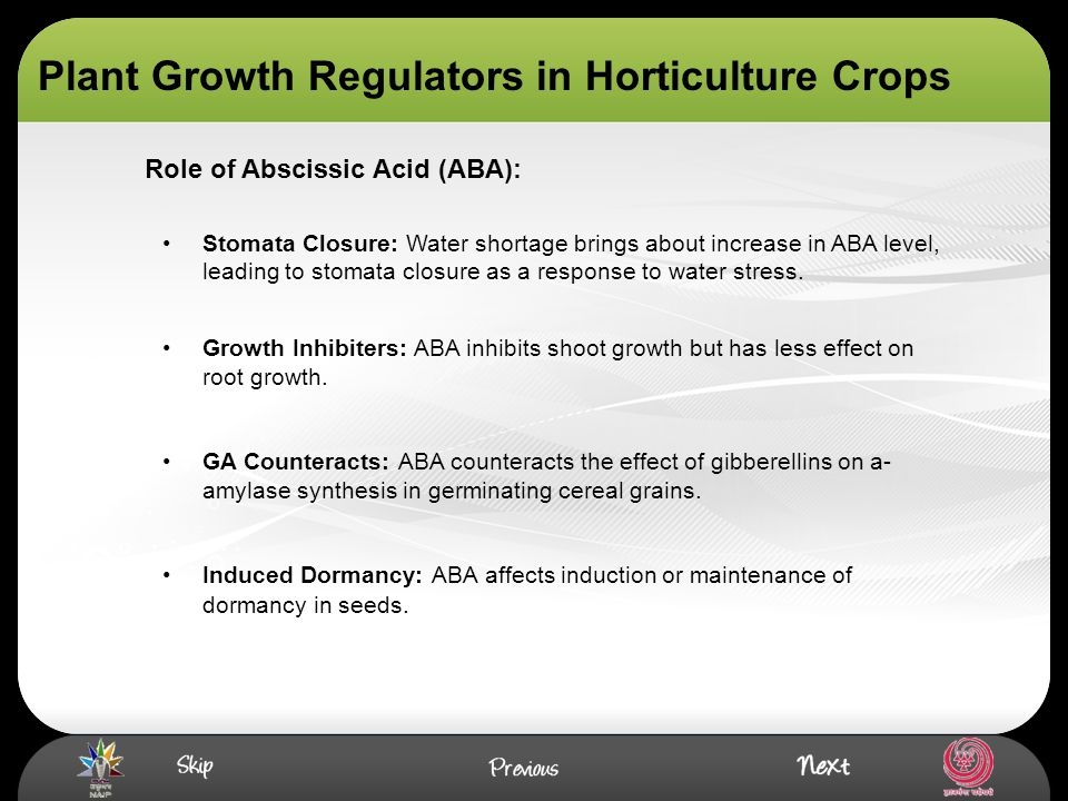 Plant Growth Regulators in Horticulture Crops Stomata Closure: Water shortage brings about increase in ABA level, leading to stomata closure as a resp