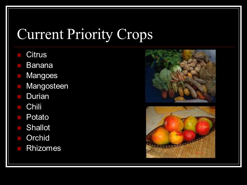 Current Priority Crops Citrus Banana Mangoes Mangosteen Durian Chili Potato Shallot Orchid Rhizomes
