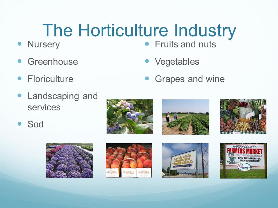 The Horticulture Industry Nursery Greenhouse Floriculture Landscaping and services Sod Fruits and nuts Vegetables Grapes and wine