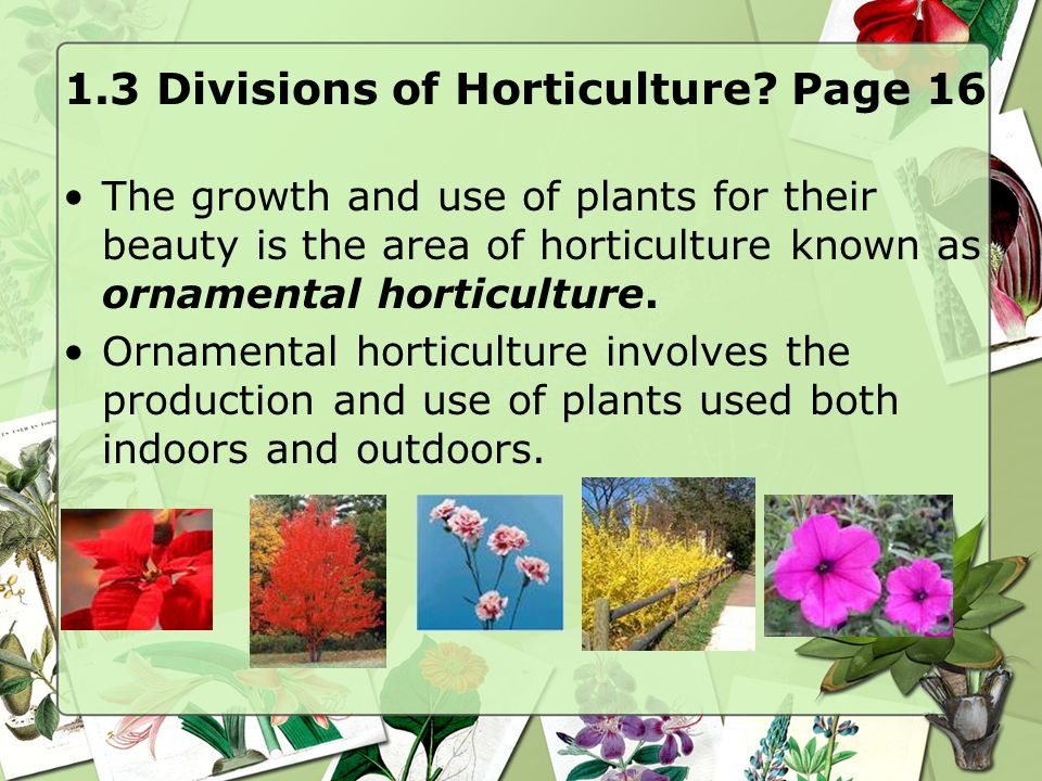1.3 Divisions of Horticulture? Page 16 The growth and use of plants for their beauty is the area of horticulture known as ornamental horticulture. Orn