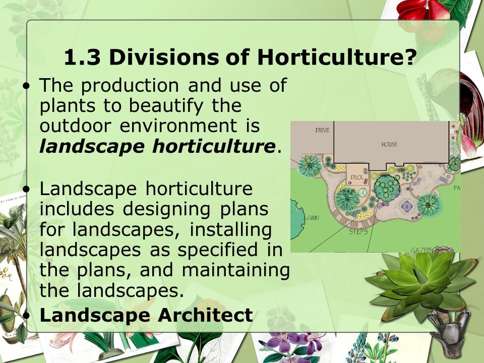 1.3 Divisions of Horticulture? The production and use of plants to beautify the outdoor environment is landscape horticulture. Landscape horticulture