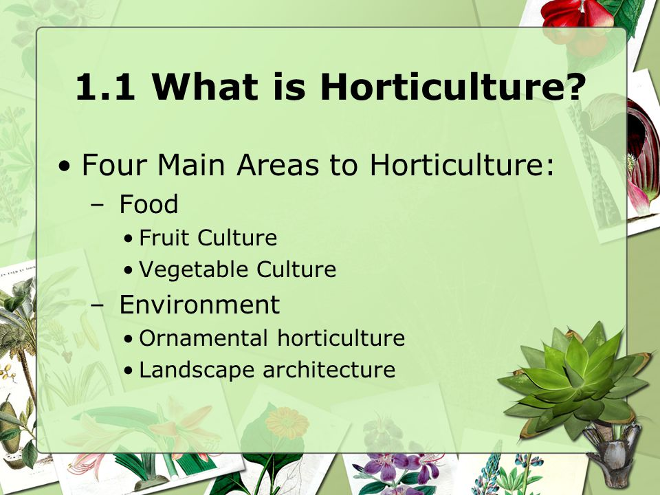 1.1 What is Horticulture? Four Main Areas to Horticulture: – Food Fruit Culture Vegetable Culture – Environment Ornamental horticulture Landscape arch