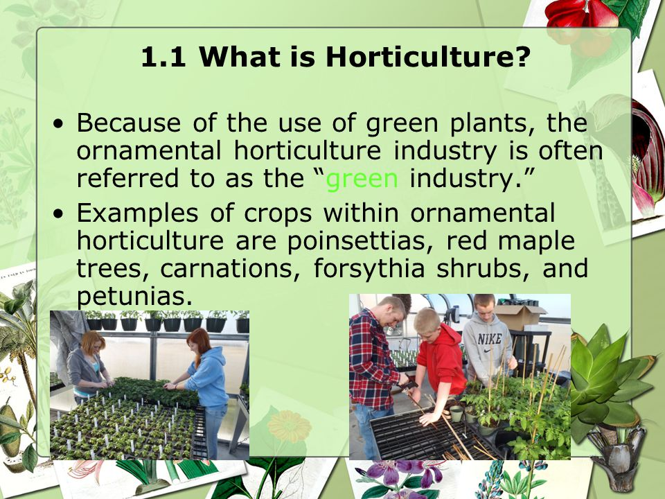 "1.1 What is Horticulture? Because of the use of green plants, the ornamental horticulture industry is often referred to as the ""green industry."" Examp"