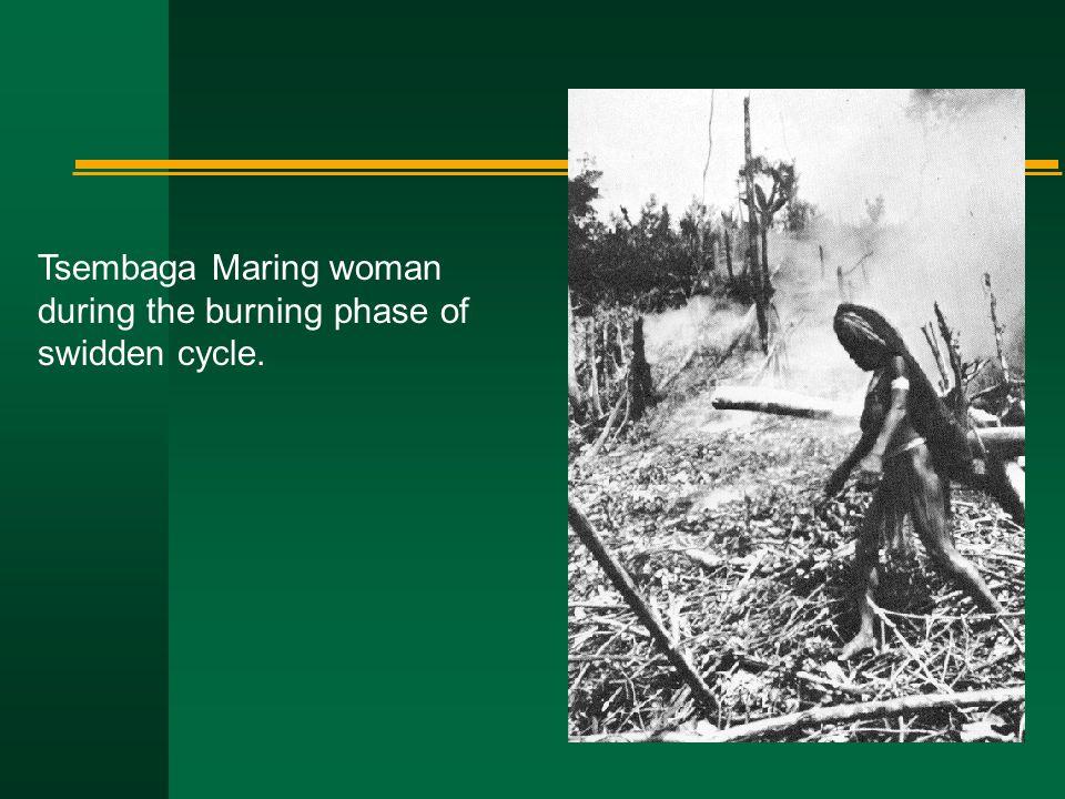 Tsembaga Maring woman during the burning phase of swidden cycle.