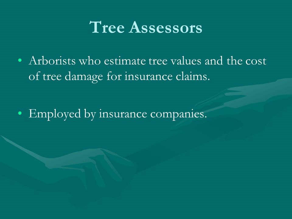 Tree Assessors Arborists who estimate tree values and the cost of tree damage for insurance claims.