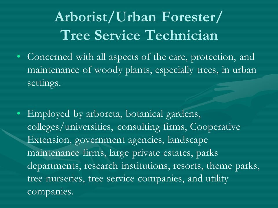 Arborist/Urban Forester/ Tree Service Technician Concerned with all aspects of the care, protection, and maintenance of woody plants, especially trees, in urban settings.