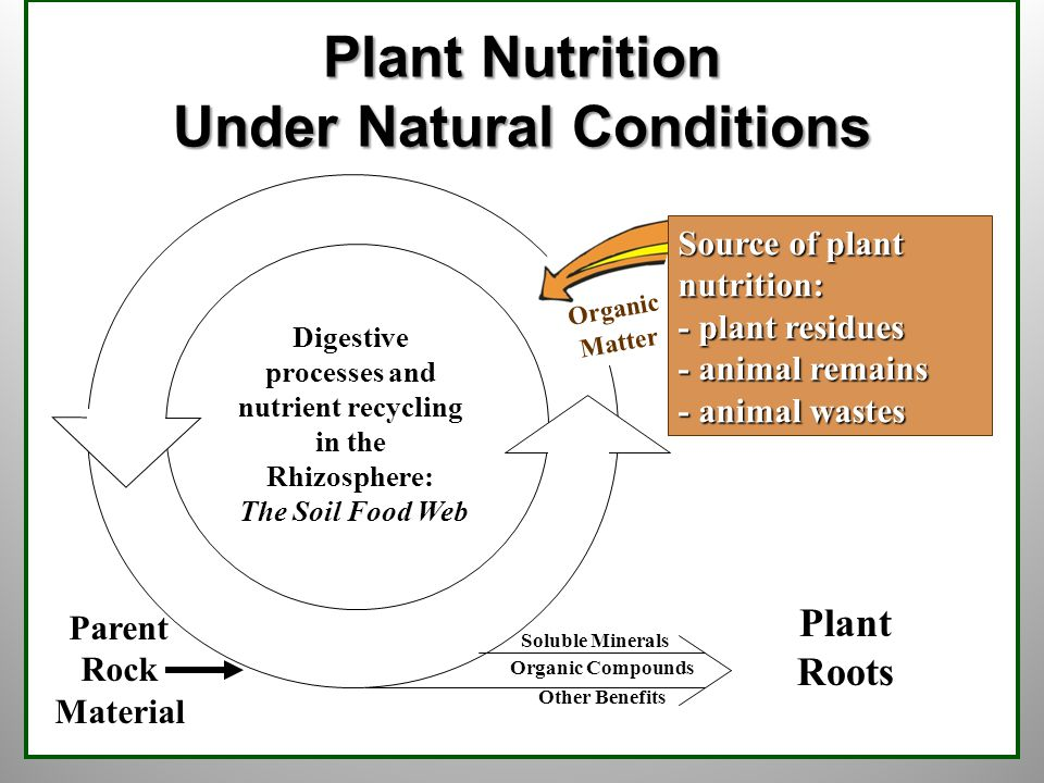 12  2005 National Center for Appropriate Technology Plant Roots Soluble Minerals Organic Compounds Other Benefits Plant Nutrition Under Natural Conditions Parent Rock Material Digestive processes and nutrient recycling in the Rhizosphere: The Soil Food Web Organic Matter Source of plant nutrition: - plant residues - animal remains - animal wastes
