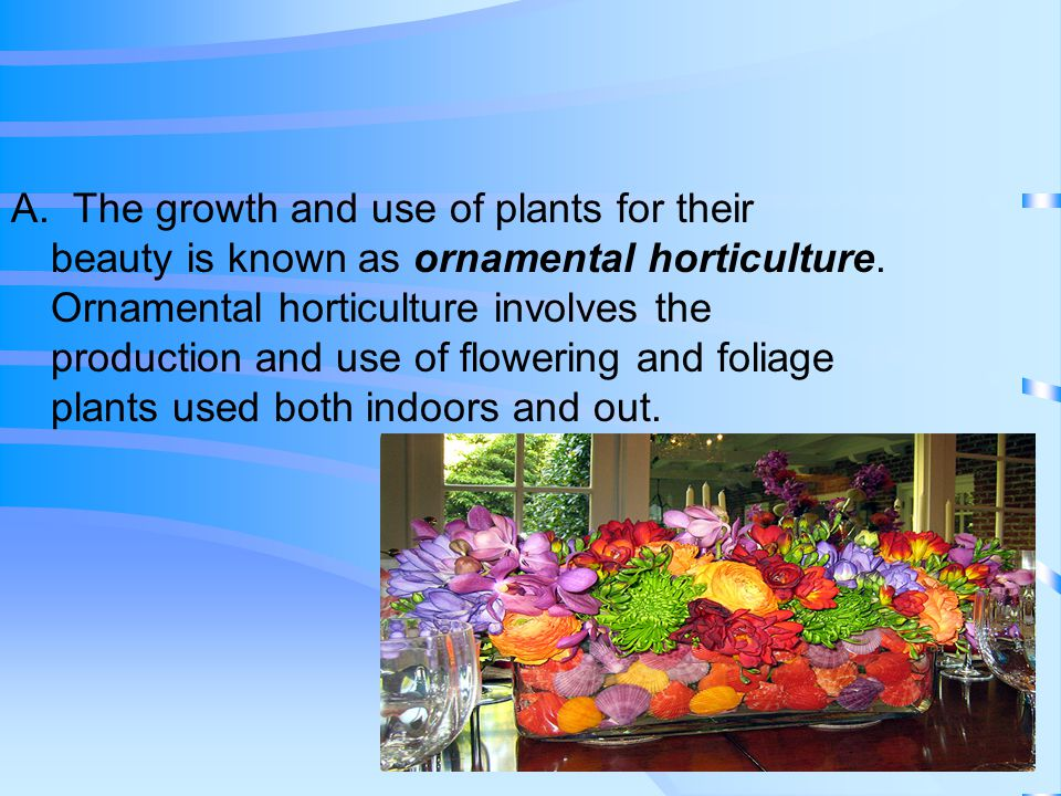 A. The growth and use of plants for their beauty is known as ornamental horticulture.