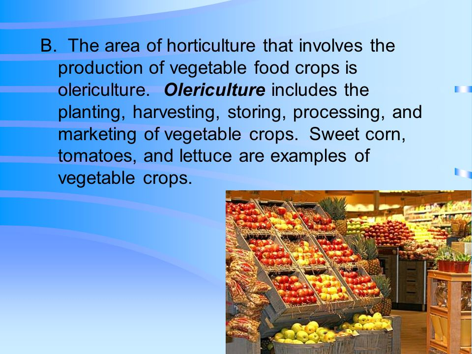 B. The area of horticulture that involves the production of vegetable food crops is olericulture.