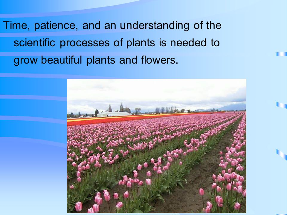Time, patience, and an understanding of the scientific processes of plants is needed to grow beautiful plants and flowers.