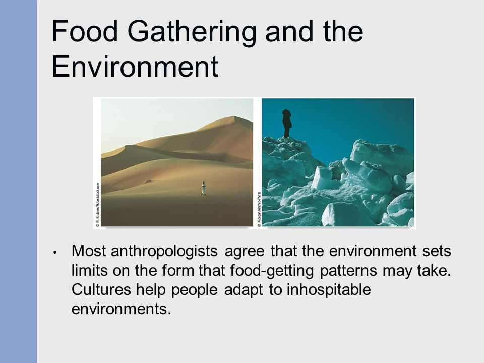Food Gathering and the Environment Most anthropologists agree that the environment sets limits on the form that food-getting patterns may take. Cultur