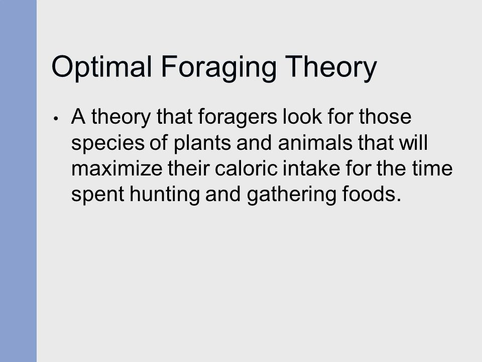 Optimal Foraging Theory A theory that foragers look for those species of plants and animals that will maximize their caloric intake for the time spent hunting and gathering foods.