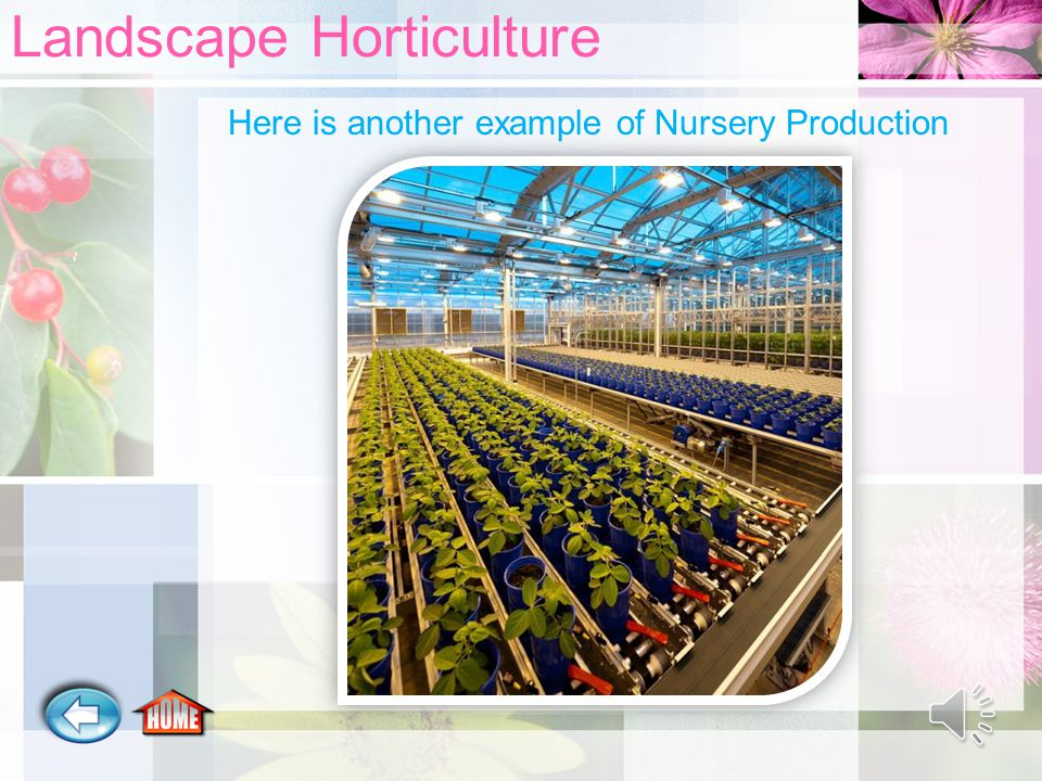 Landscape Horticulture Here is another example of Nursery Production