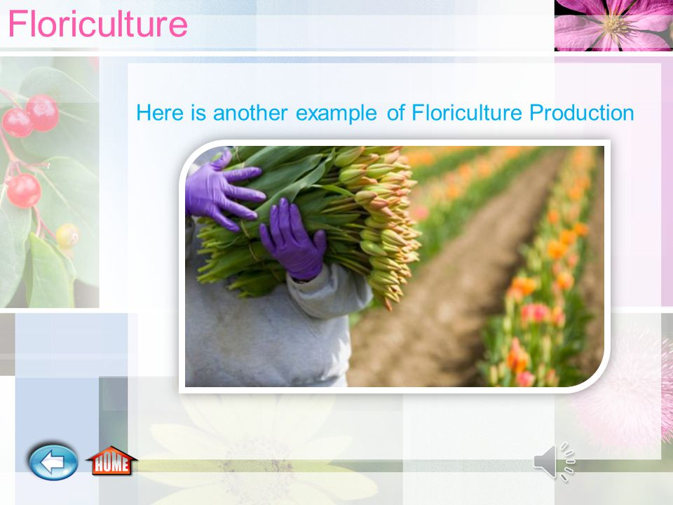 What is Floriculture. It is the growing and selling of flowering plants.