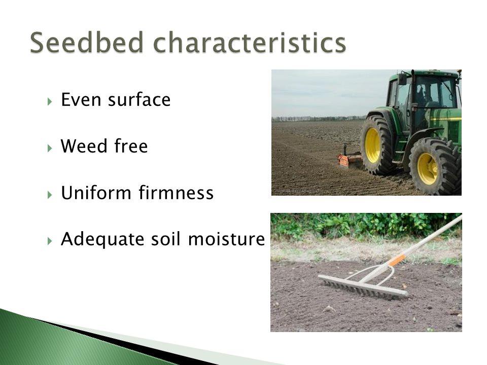  Even surface  Weed free  Uniform firmness  Adequate soil moisture www.aardappelpagina.nl www.diynetwork.com