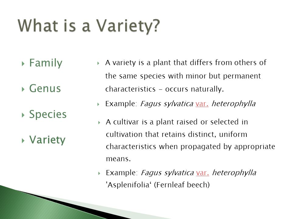  Family  Genus  Species  Variety  A cultivar is a plant raised or selected in cultivation that retains distinct, uniform characteristics when propagated by appropriate means.
