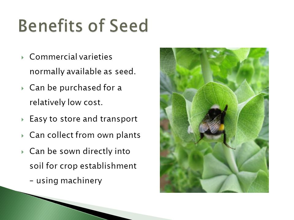  Commercial varieties normally available as seed.
