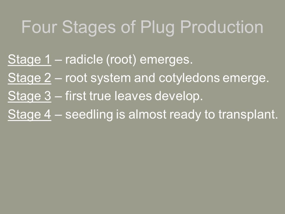 Four Stages of Plug Production Stage 1 – radicle (root) emerges.