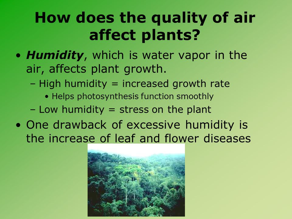 How does the quality of air affect plants.