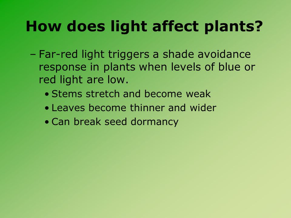 How does light affect plants.
