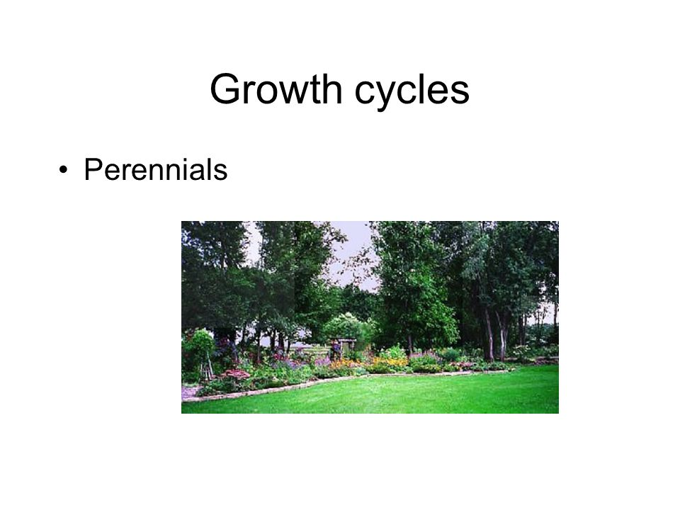 Growth cycles Perennials
