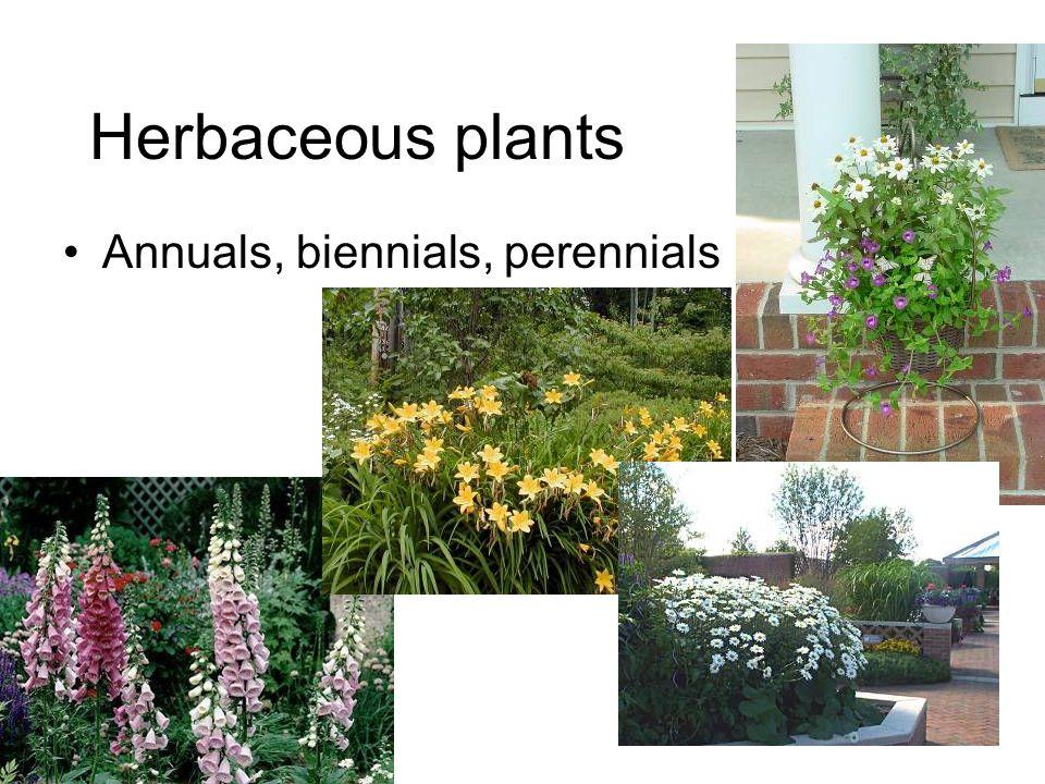 Herbaceous plants Annuals, biennials, perennials