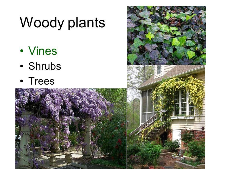 Woody plants Vines Shrubs Trees
