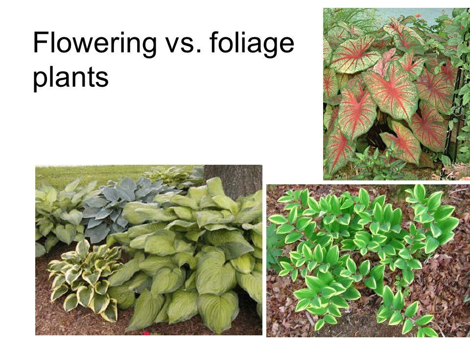 Flowering vs. foliage plants