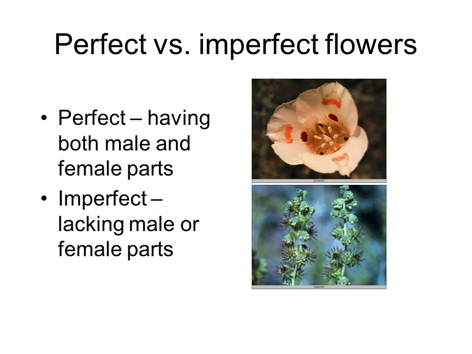 Perfect vs. imperfect flowers Perfect – having both male and female parts Imperfect – lacking male or female parts