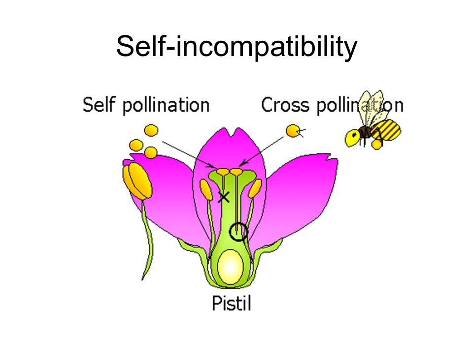 Self-incompatibility