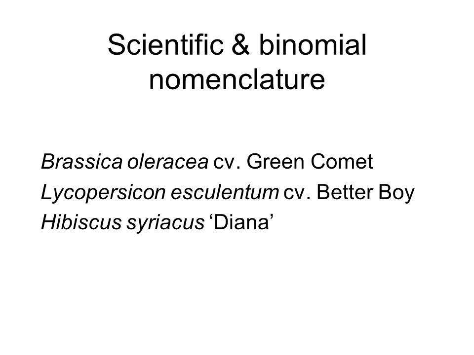 Scientific & binomial nomenclature Brassica oleracea cv.