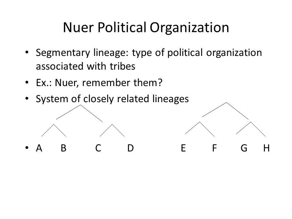 Nuer Political Organization Segmentary lineage: type of political organization associated with tribes Ex.: Nuer, remember them.