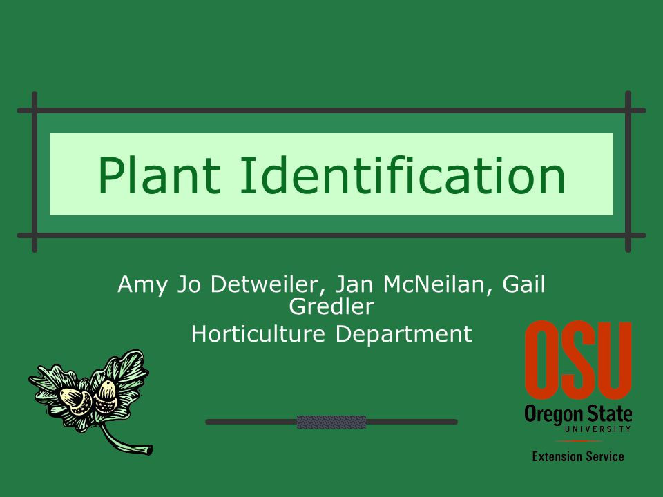 Plant Identification Amy Jo Detweiler, Jan McNeilan, Gail Gredler Horticulture Department