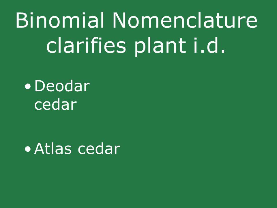 Binomial Nomenclature clarifies plant i.d. Deodar cedar Atlas cedar