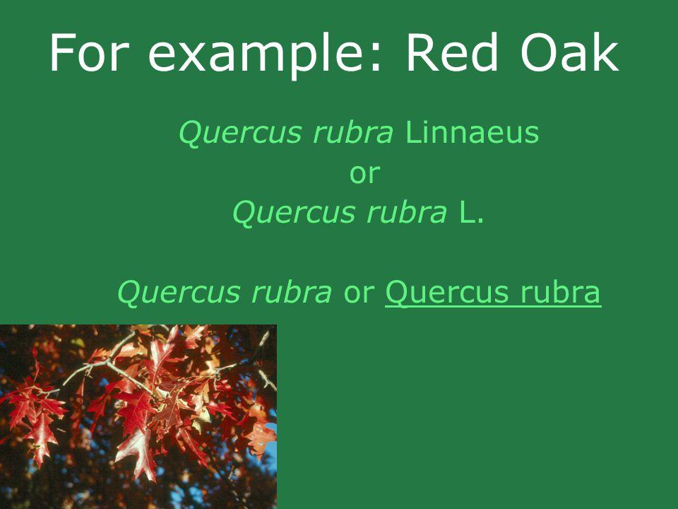 For example: Red Oak Quercus rubra Linnaeus or Quercus rubra L. Quercus rubra or Quercus rubra