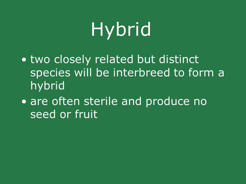 Hybrid two closely related but distinct species will be interbreed to form a hybrid are often sterile and produce no seed or fruit