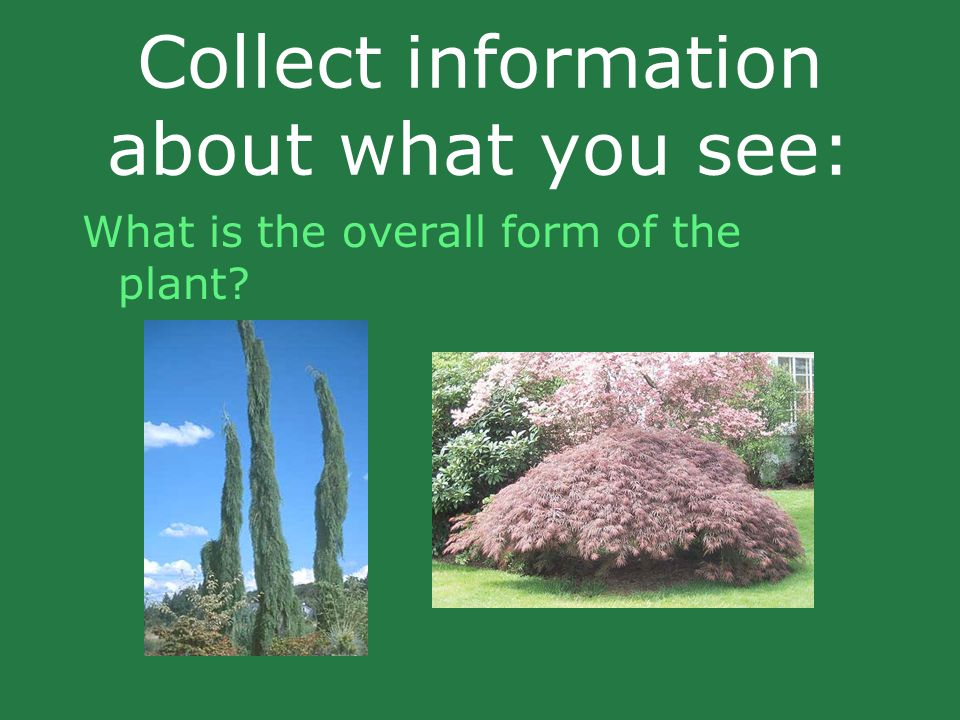Collect information about what you see: What is the overall form of the plant?