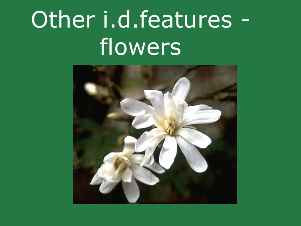 Other i.d.features - flowers
