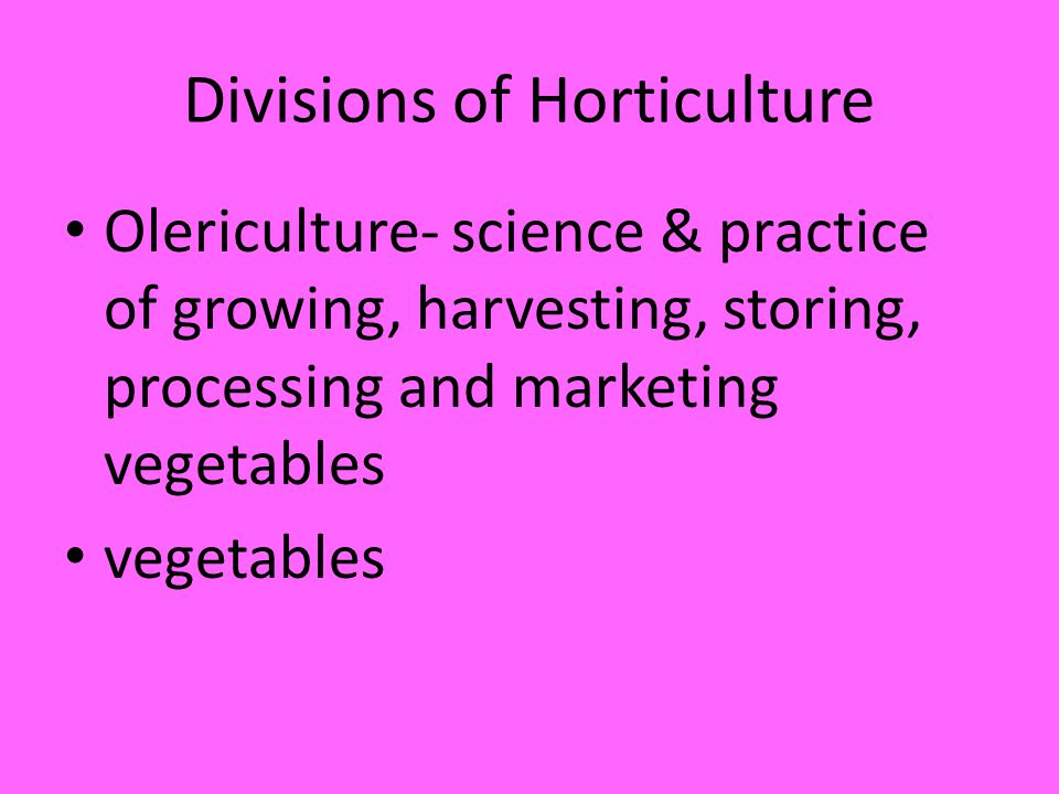 Divisions of Horticulture Olericulture- science & practice of growing, harvesting, storing, processing and marketing vegetables vegetables