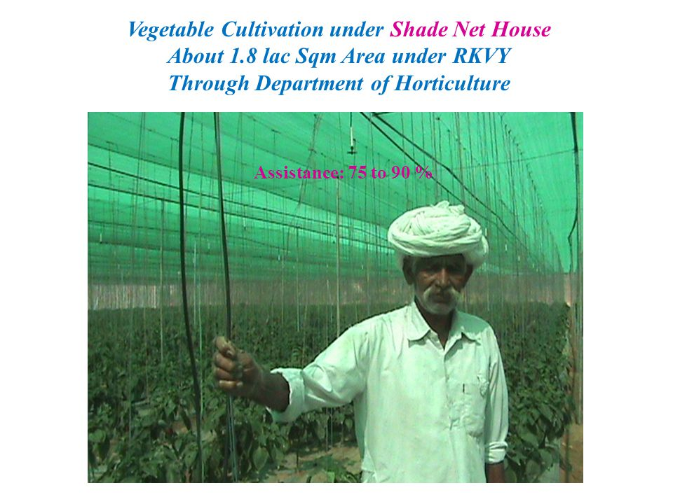 Vegetable Cultivation under Shade Net House About 1.8 lac Sqm Area under RKVY Through Department of Horticulture Assistance: 75 to 90 %